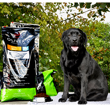 Labrador met Oliver's Grain Free Adult Chicken zak 12 kg
