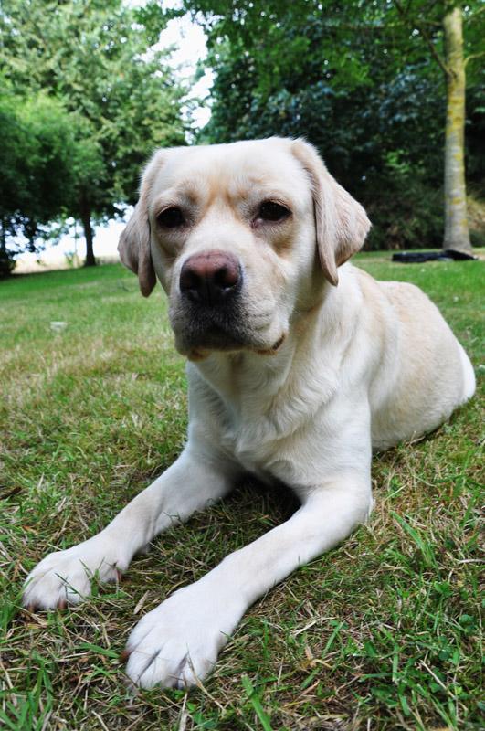 Noxa is een gezonde hond en eet graag rundsstrips