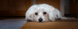 Je hond kan leren om weer alleen te zijn