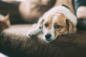 Je hond heeft last van stress of verveelt zich